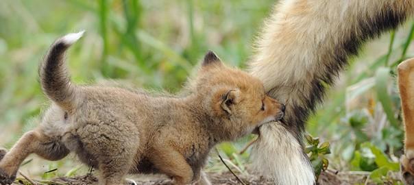 自然の中でも変わらず注がれる両親の愛23選