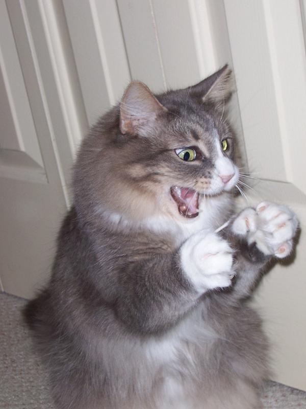 ネコと綿棒3