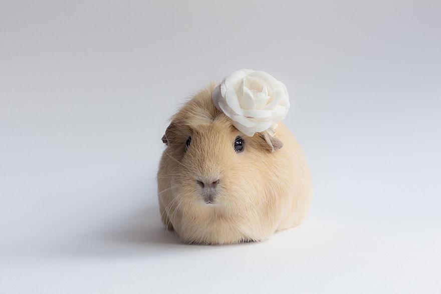 guinea-pig-booboo-lieveheersbeestje-17