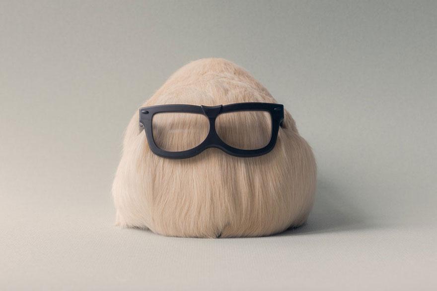 guinea-pig-booboo-lieveheersbeestje-18