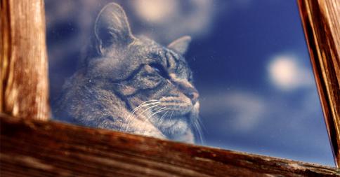 「早く帰ってこないかニャ」主人の帰りを待つ猫18選