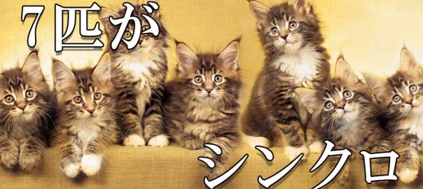 これは癒される!見事にシンクロする7匹の子猫たち