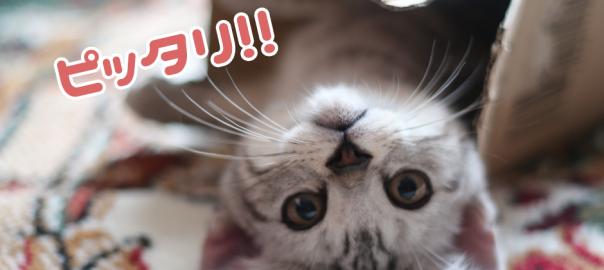 【収納上手】箱にきれいに収まる猫たち20選