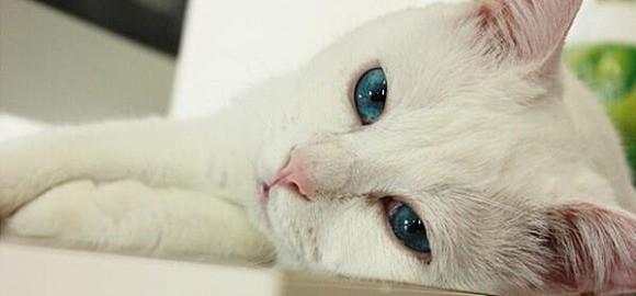 【美人の寝顔を見てはいけない】美ネコ「セツ」のとんでもプライベート写真