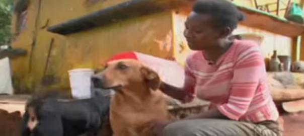 【仲間のため】廃品置き場に住む心優しい犬