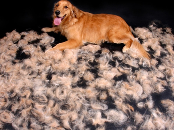 shedding-pup-9