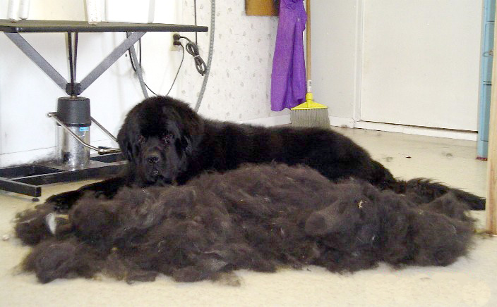 dog_shedding_Crazty