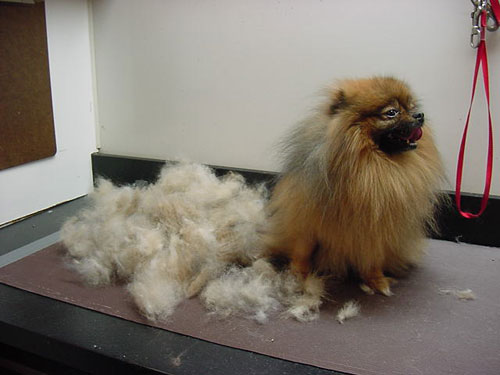 dog_shedding_crazy1