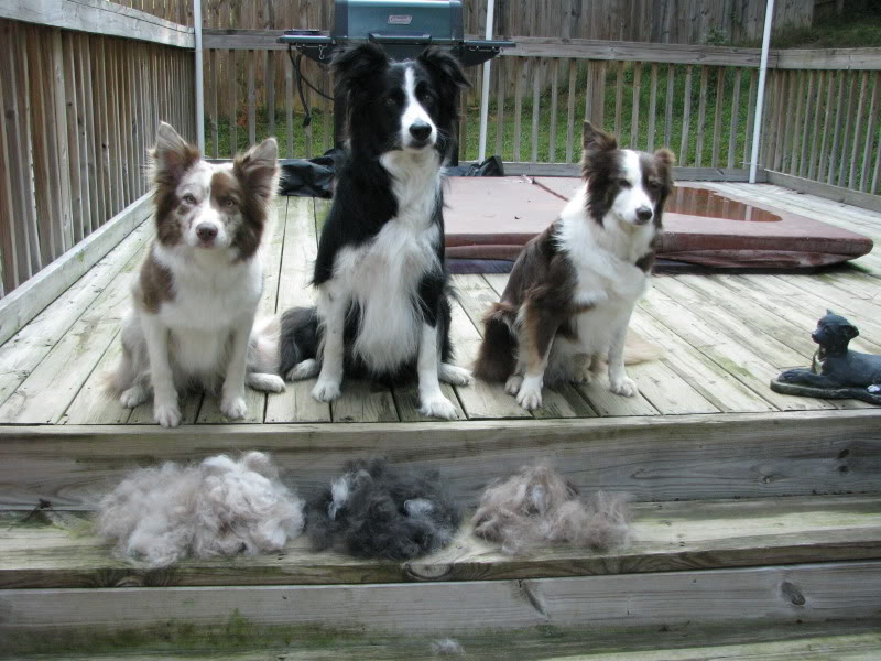 dogs_shedding_like_crazy
