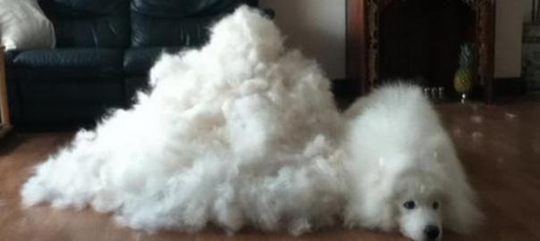飼い主の苦労がわかる!ものすごい量の抜け毛を披露する犬たち