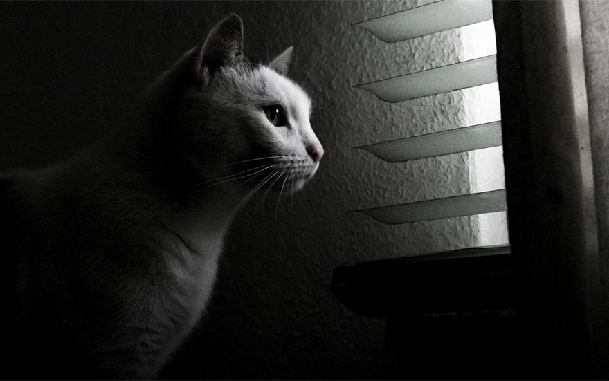 cat-waiting-window-3
