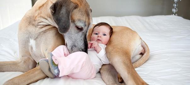 一緒に育てたくなる!犬と赤ちゃんの「ほんわか」な瞬間13選