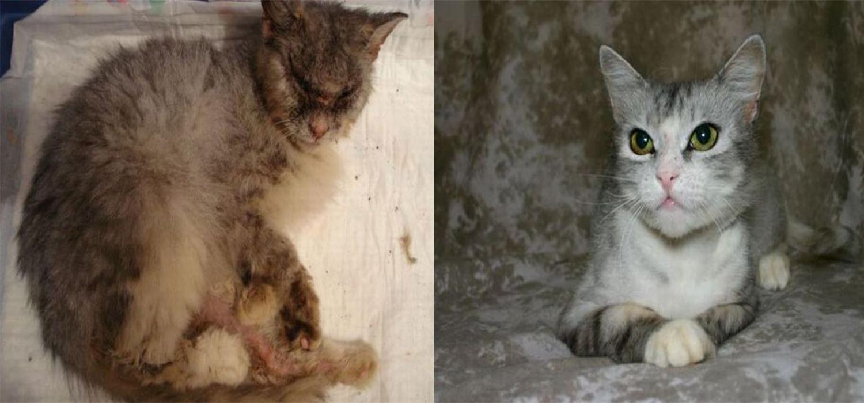 catacatcat1