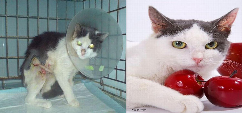 catacatcat2