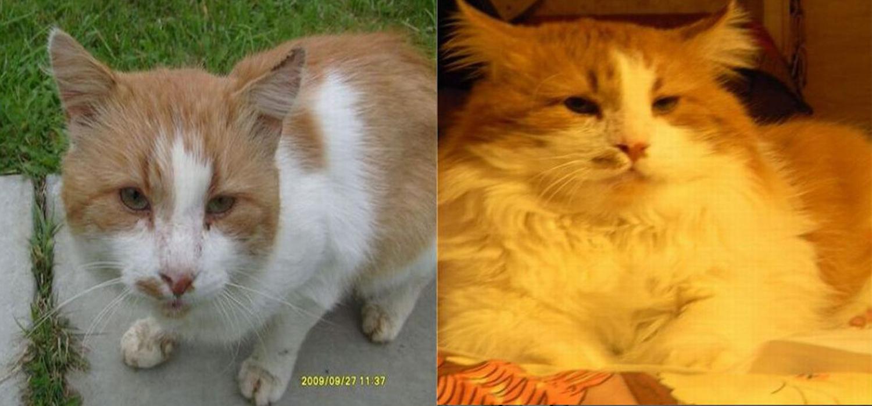 catacatcat4