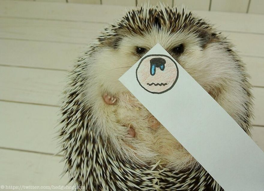 hedgehog-marutaro-paper-faces-twitter-17__880