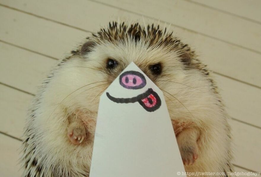 hedgehog-marutaro-paper-faces-twitter-25__880