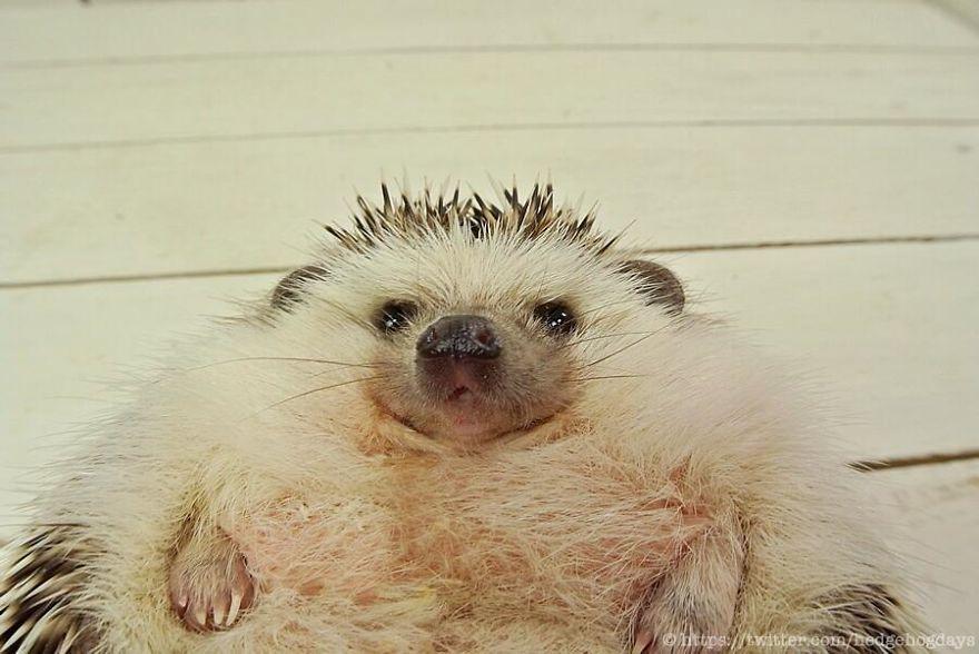 hedgehog-marutaro-paper-faces-twitter-22__880