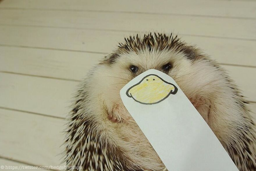 hedgehog-marutaro-paper-faces-twitter-18__880