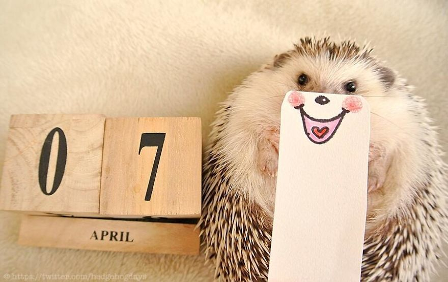 hedgehog-marutaro-paper-faces-twitter-2__880