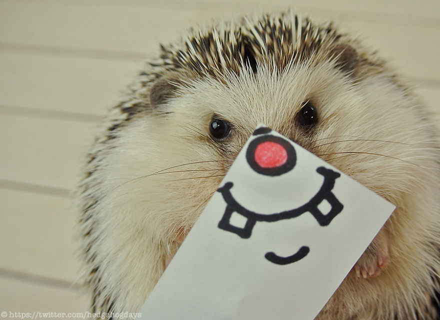 hedgehog-marutaro-paper-faces-twitter-27__880