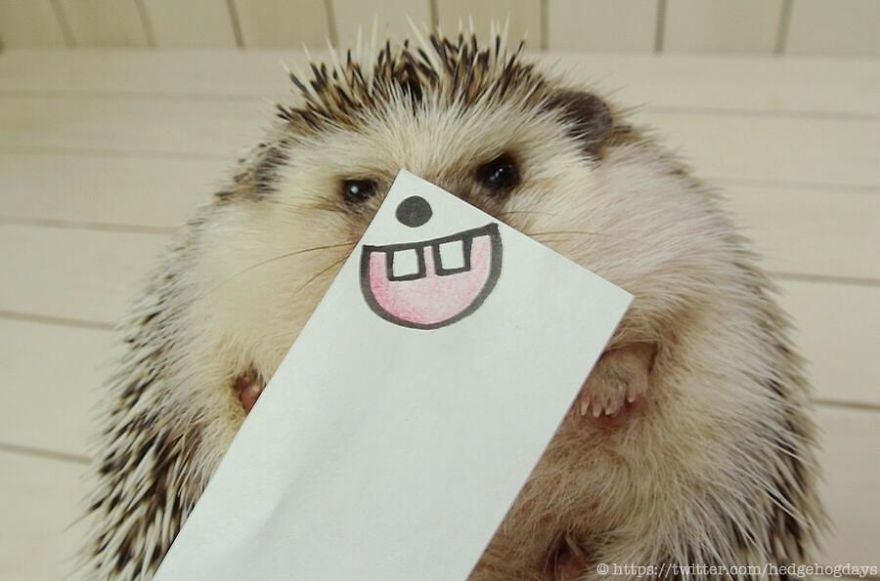 hedgehog-marutaro-paper-faces-twitter-19__880