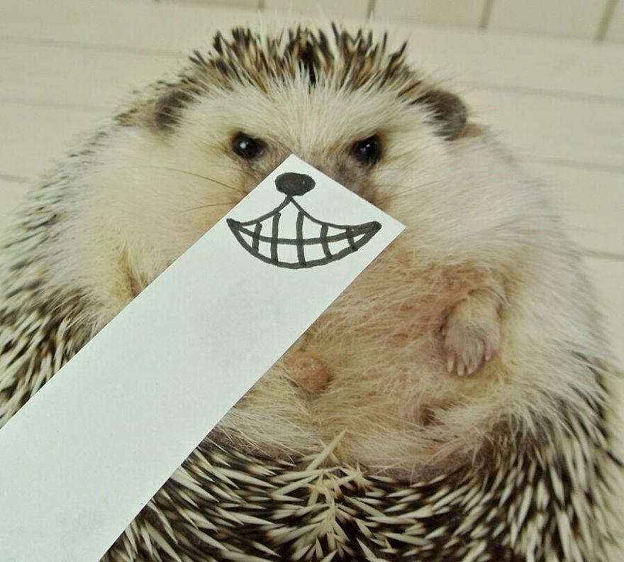 hedgehog-marutaro-paper-faces-twitter-4__880