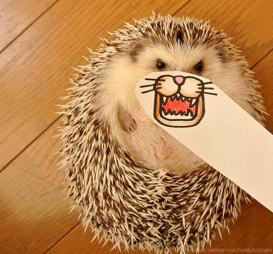 hedgehog-marutaro-paper-faces-twitter-8__880