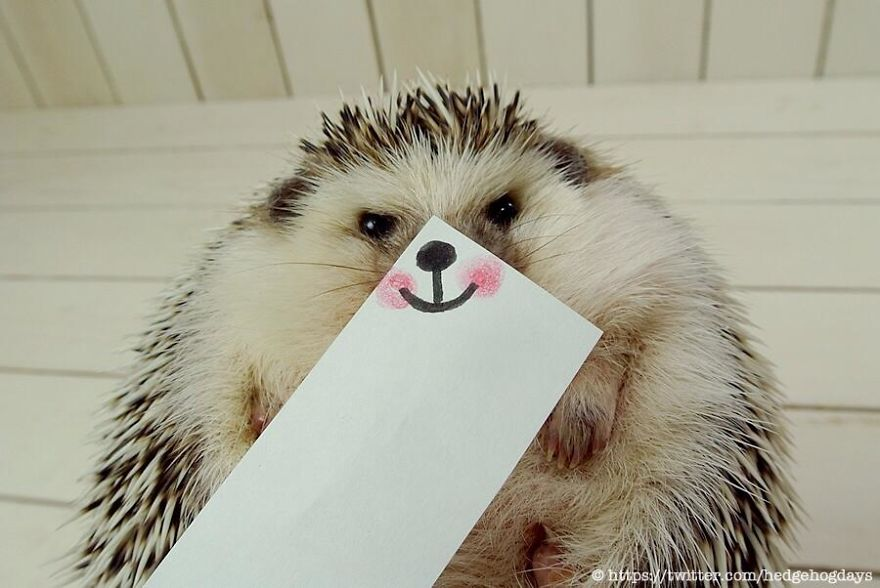 hedgehog-marutaro-paper-faces-twitter-7__880
