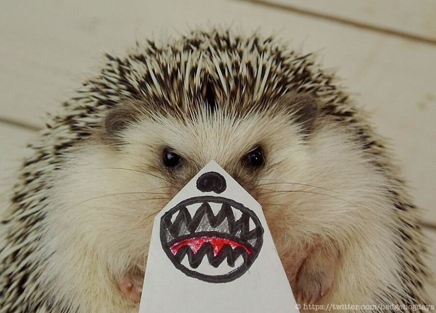 hedgehog-marutaro-paper-faces-twitter-21__880