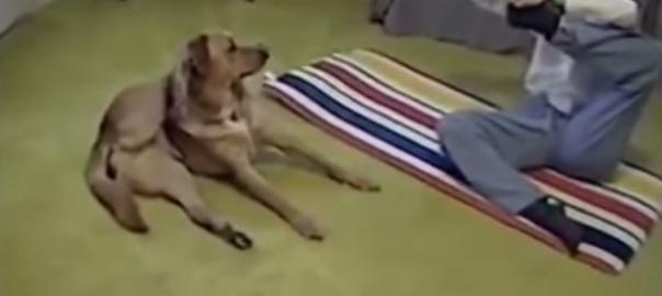 体が硬いご主人にヨガポーズを見せつける犬