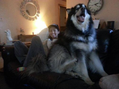 大きさ犬3