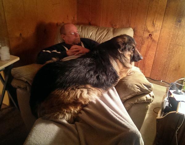 大きさ犬12