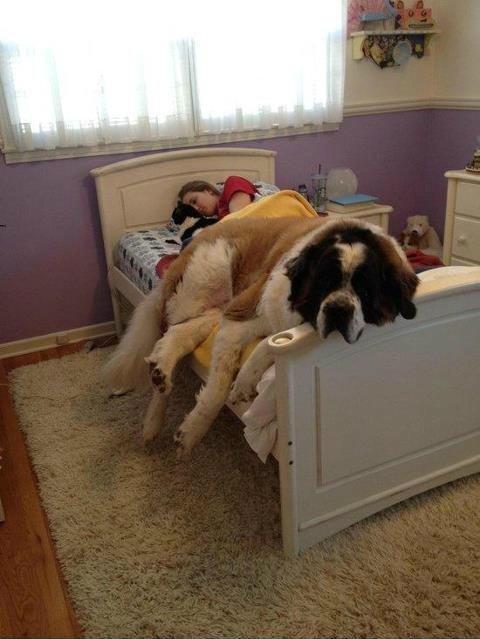 大きさ犬13