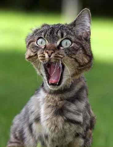 20-Funny-Shocked-Cat-Memes-6
