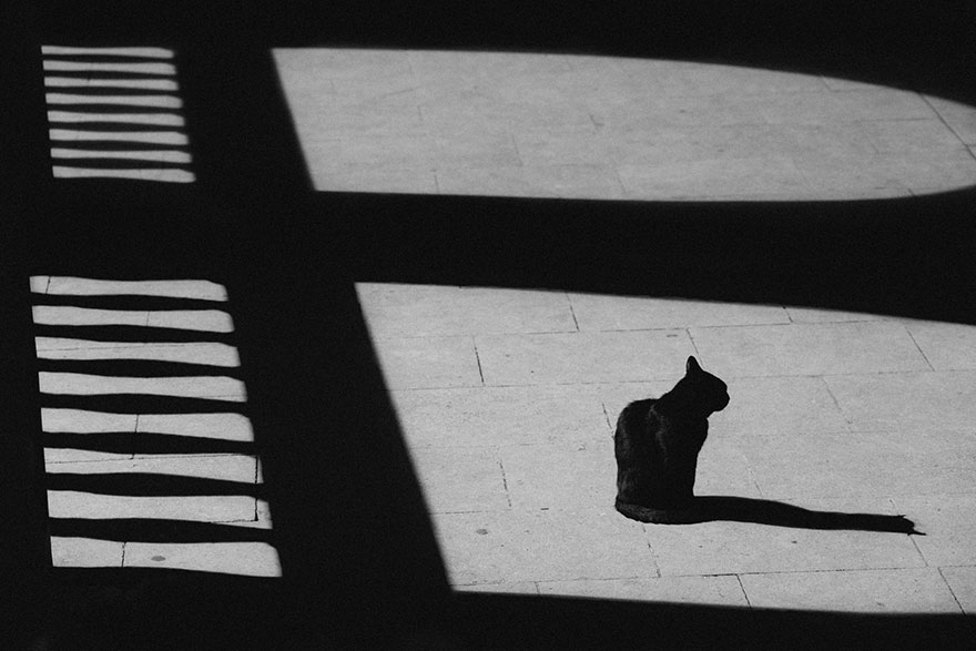 cat-black-and-white-photography-33
