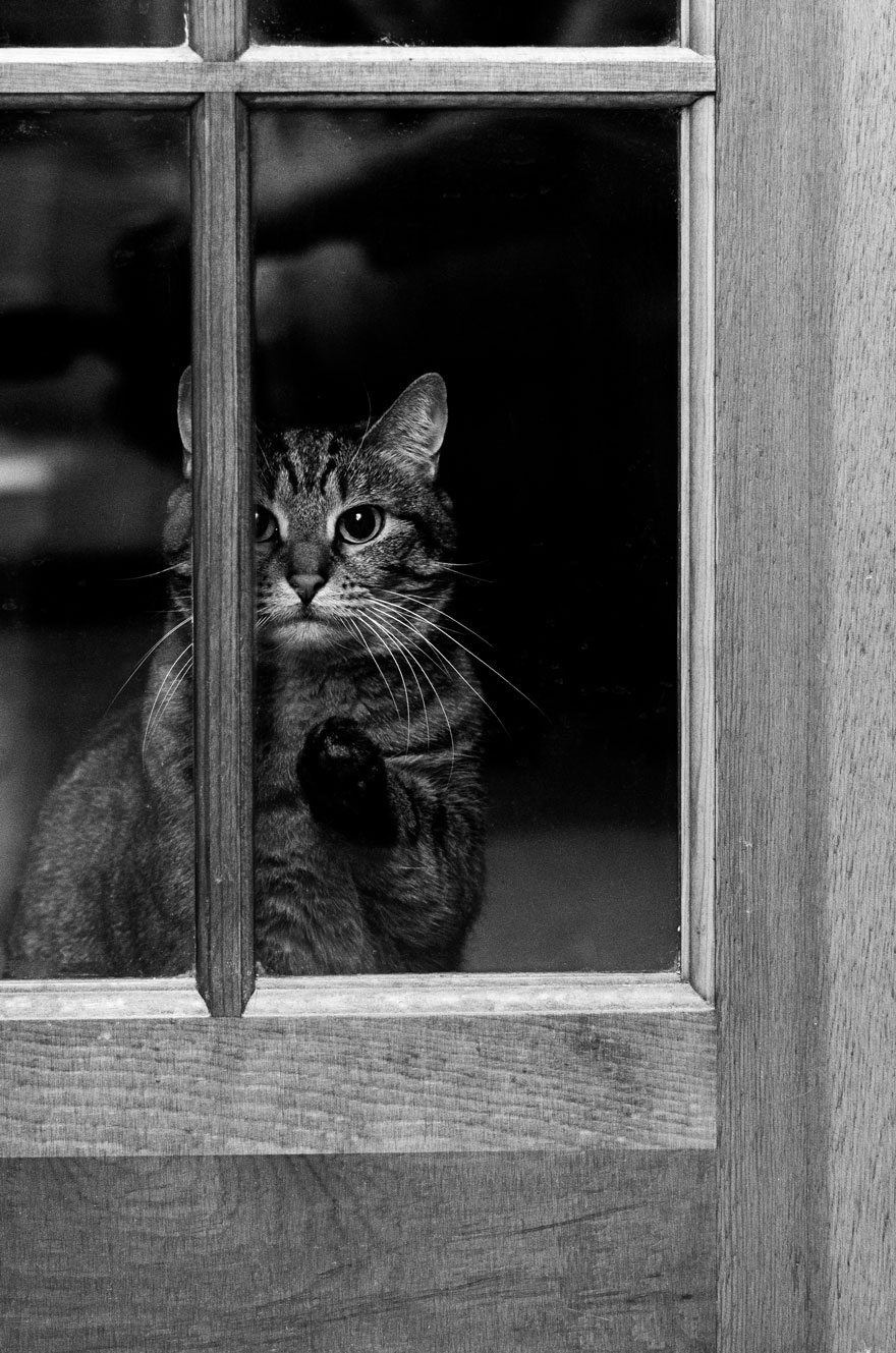 cat-black-and-white-photography-62