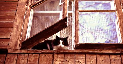 まだかなぁ...窓際で主人の帰りを待つ動物たち17選
