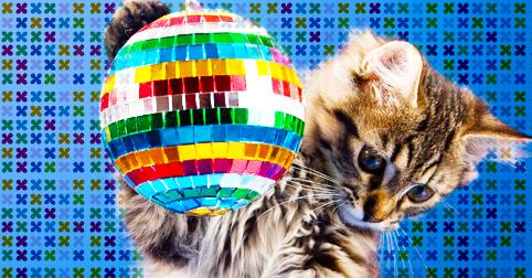 ネットで話題になった「可愛すぎる猫たち」を音楽に乗せてまとめてみた