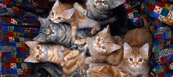 「塵も積もれば山となる」って言うけど、猫が積もるとどうなるの?→可愛い過ぎた16選