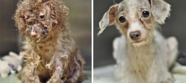 【美しい変貌ぶり】捨て犬たちの保護活動から命の大切さを学ぶ