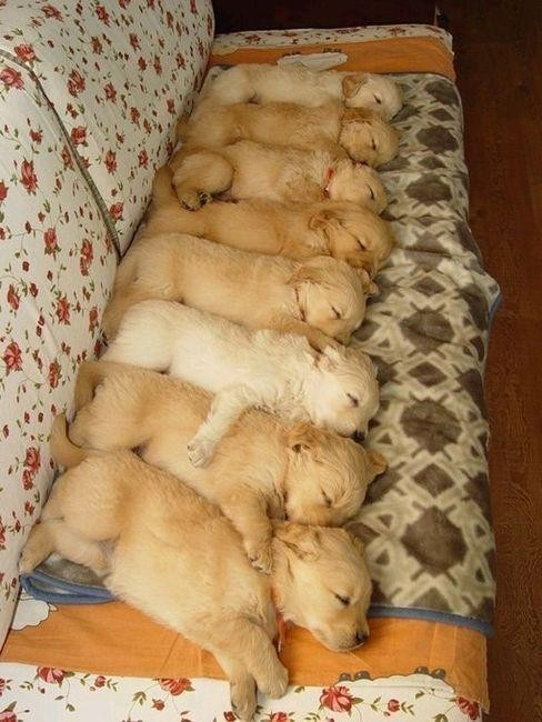 puppies-line-couch-620x