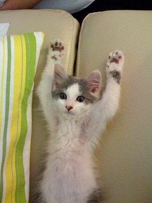 Hands-Up-s