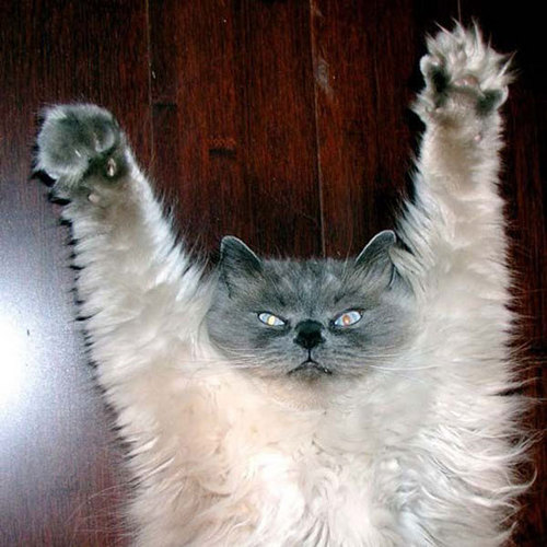 Funny-Cat-Pictures-cats-935742_500_500
