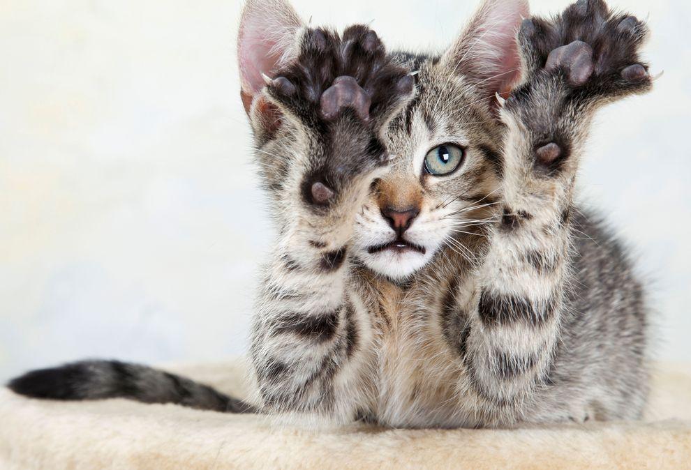 cat-declawing_70898_990x742