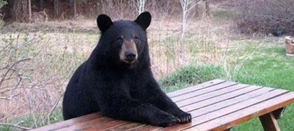 ある日森の中クマさんに出会ったら人間みたいだった。18選