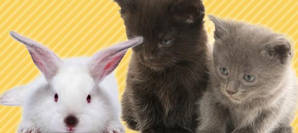 ひとりぼっちの赤ちゃんウサギを助けたのは一匹のお母さんネコでした