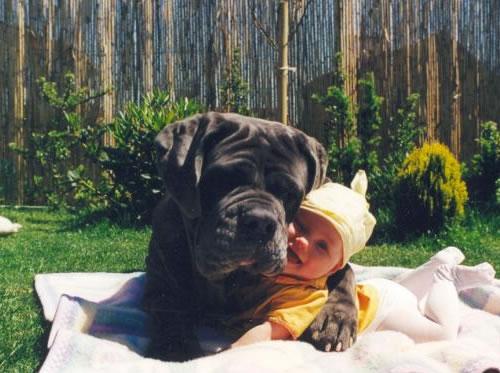 dog-hugs-baby