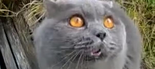 あかん!あかん!! 猫が何かを訴えかけてくる