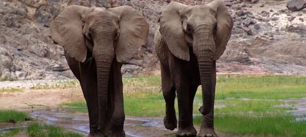 音楽最高!楽器の音色に合わせて踊る2匹の象